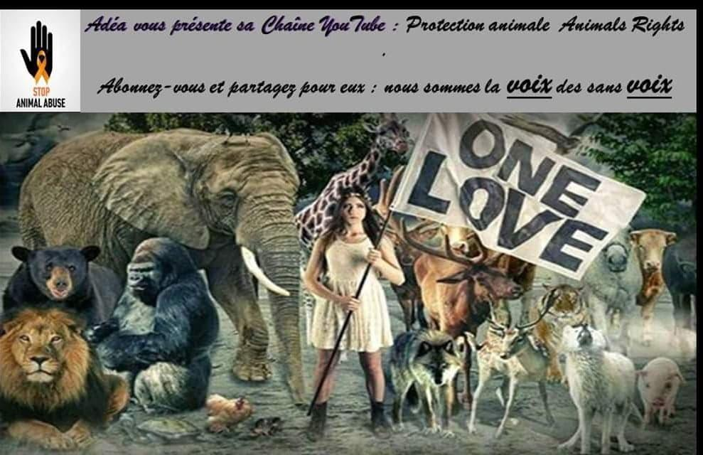 Protection animale Animals Rights